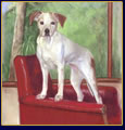 "Pastel Portraits of Dogs: ""The Best Seat"""